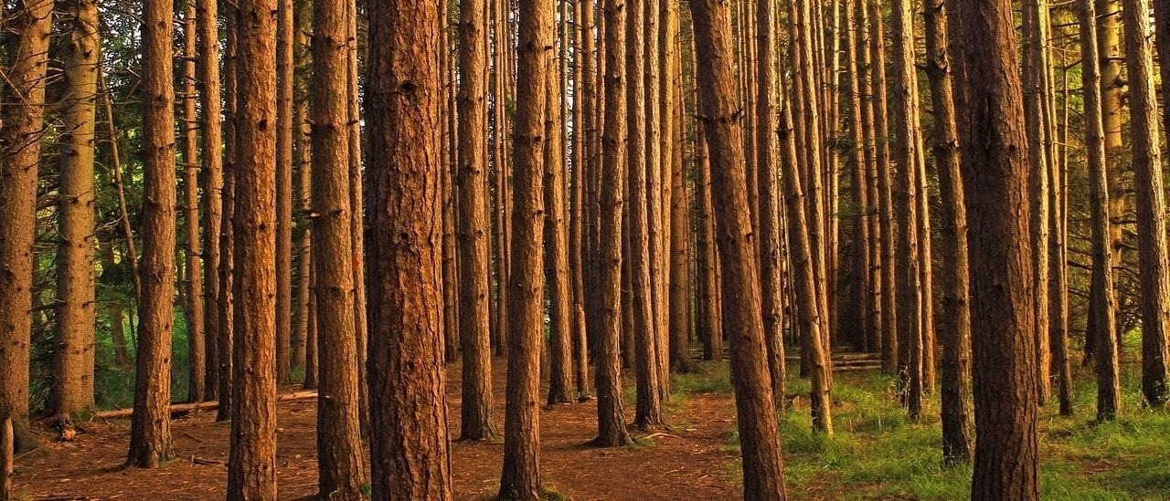 ¿Cuál es el plan estratégico para el desarrollo de la forestación en Argentina?