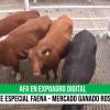 11/09- AFA remató más de 1000 cabezas de ganado