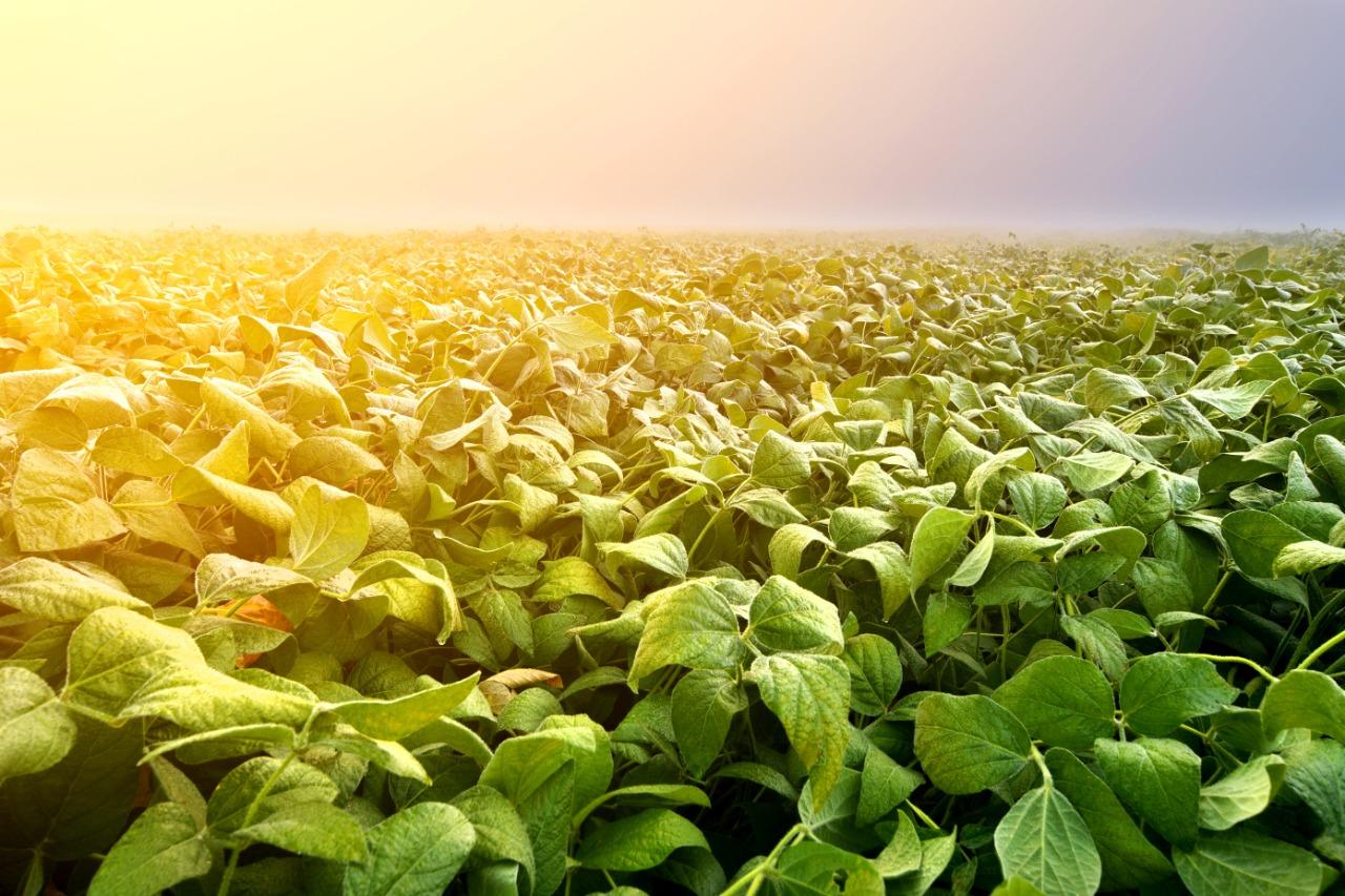 Las energías verdes y su aporte al medioambiente