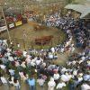 "18/08-COLOMBO: ""FUE UN REMATE ÁGIL, EN UN CONTEXTO DE MUCHA INCERTIDUMBRE"""
